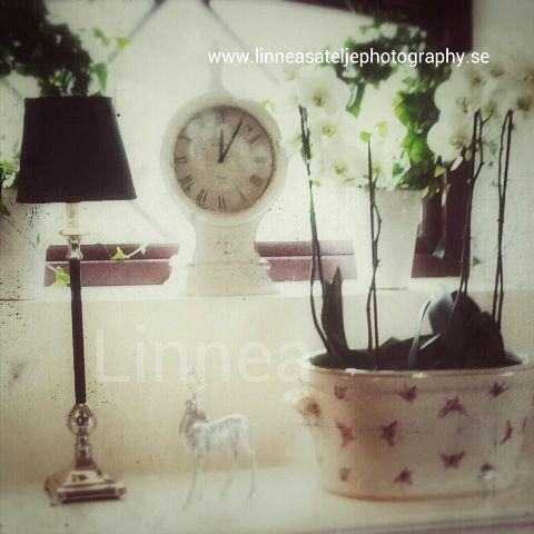 photography retro vintage interior flower