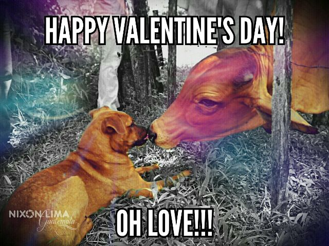 love animal pets dogs valentine