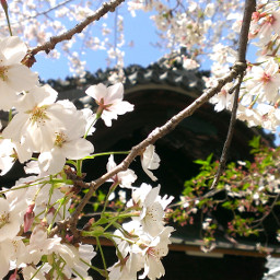 nature flower spring
