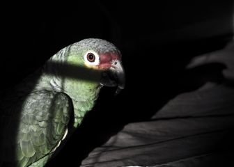 pets & animals pedro bird