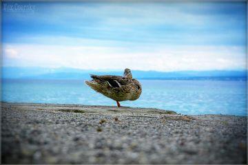 art bird summer portrait photography