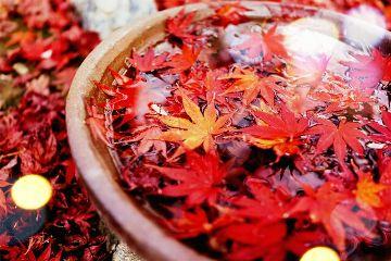 leaves autumn colorful color splash parque