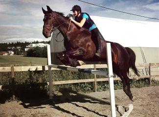 beautiful horse emotions animals girl