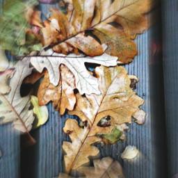 nature photography rain fall autumnleaves