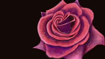 dcrose drawing art flower rain