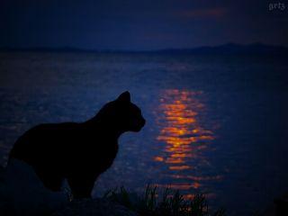 shilouettes photography petsandanimals sunset emotions