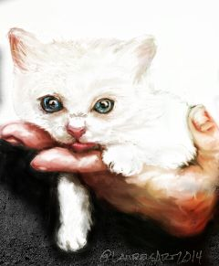 art cat kitten animals cute