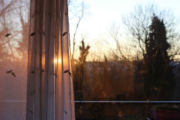 window sunshine winter cold photography