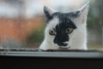 cat cute window photography winter