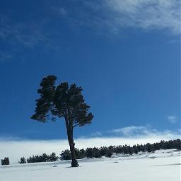 wapwhite winter