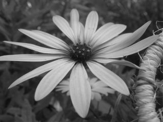 white andblack