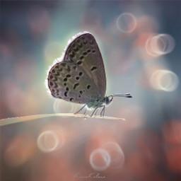 butterfly macro macroart nikon indonesia