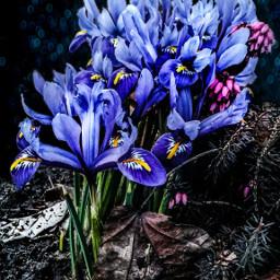 photography editstepbystep flower nature love